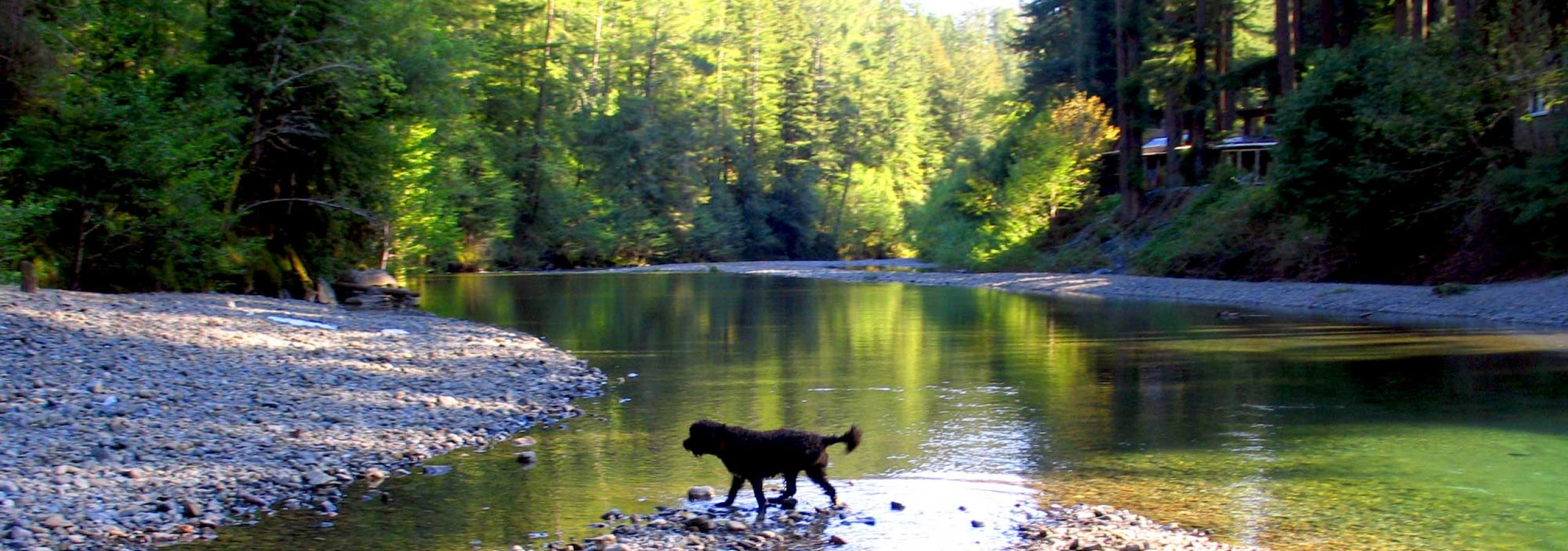 Russian River Dog